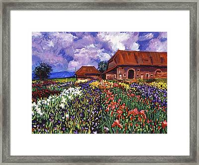 Fields Of Iris Framed Print by David Lloyd Glover