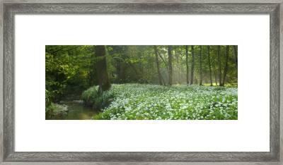 fields of Legend Framed Print