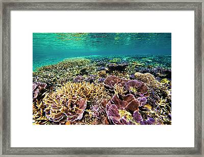 Fields Of Robust Coral Framed Print