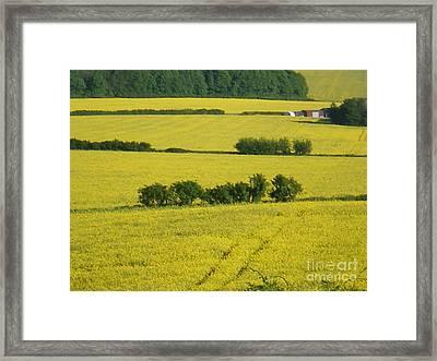 Fields Of Yellow Framed Print by Ann Fellows