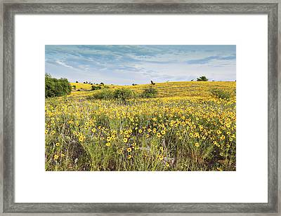 Fields Of Yellow Framed Print by Charrie Shockey