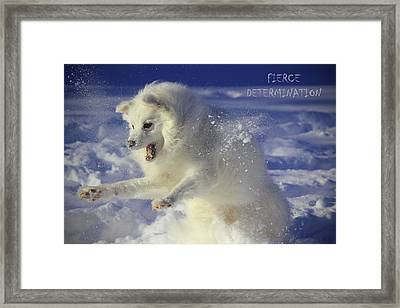 Fierce Determination Framed Print by Melanie Melograne