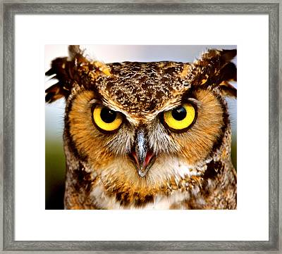Fierce Eyes Framed Print by Parker Cunningham