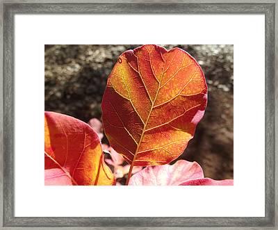 Fiery Brilliance Framed Print by James Rishel