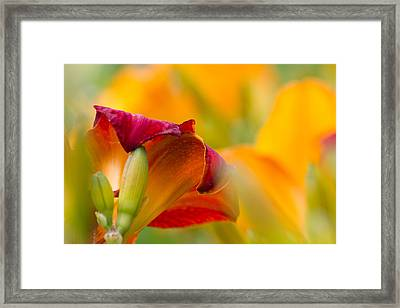 Fiery Flora Framed Print by Mary Amerman