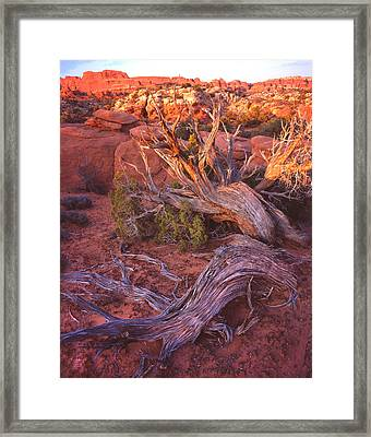 Fiery Furnace Juniper Framed Print by Ray Mathis