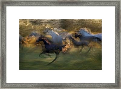 Fiery Gallop Framed Print by Milan Malovrh
