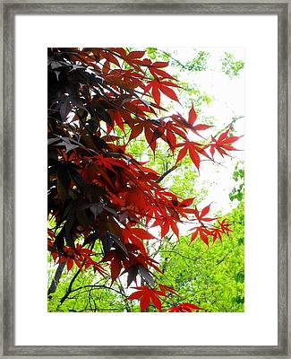 'fiery Maple' Framed Print