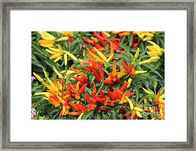 Fiery Ornamentals Framed Print