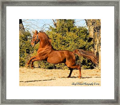 Fiery Spirit Framed Print