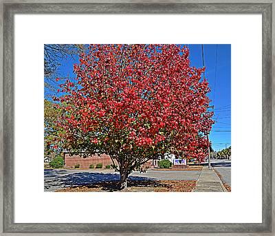 Fiery Tree Framed Print