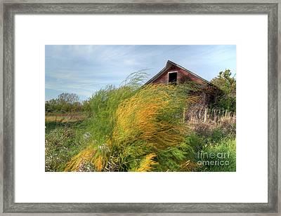 Fiery Weed And Barn Framed Print by Deborah Smolinske