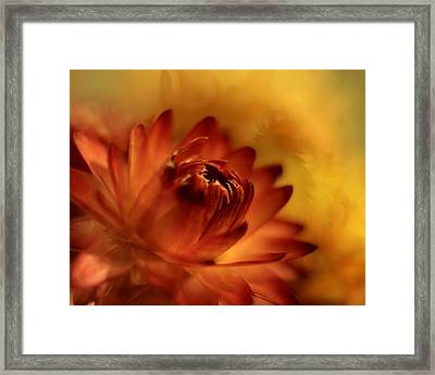 Fiery Framed Print by Ann Bridges