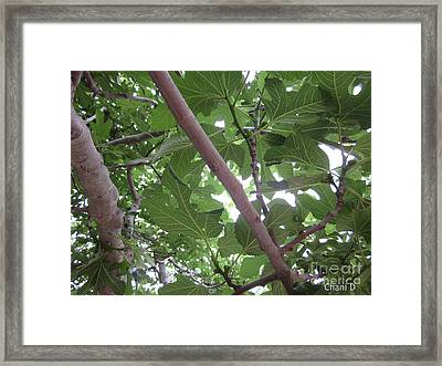 Fig Tree Framed Print by Chani Demuijlder