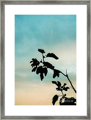 Fig Tree Framed Print by Sarah Loft