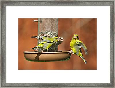 Fight For Food Framed Print