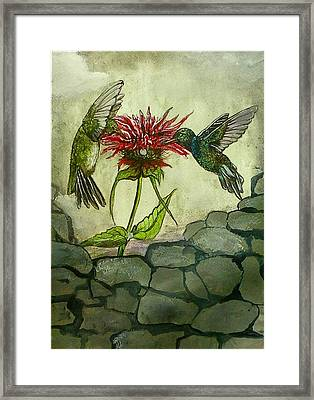 Fight Of The Hummingbirds Framed Print by Alexandria Weaselwise Busen