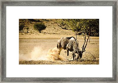 Fight The Bush Framed Print by Andy-Kim Moeller