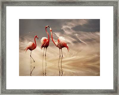 Fighting ... Framed Print