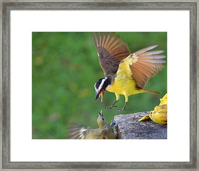 Fighting For Food Framed Print by Anton Joseph