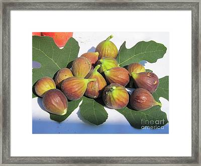 Framed Print featuring the photograph Figs First Harvest 2012 by Tina M Wenger