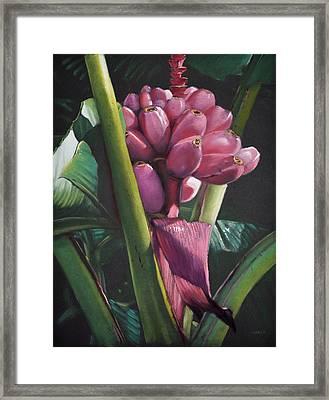 Fijian Bananas Framed Print