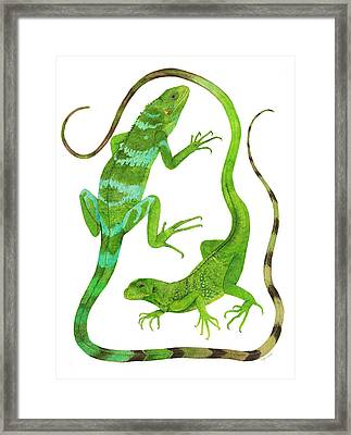 Fijian Iguanas Framed Print