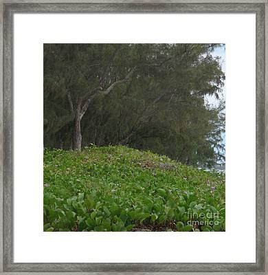 Filaos - Ile De La Reunion - Reunion Island Framed Print by Francoise Leandre