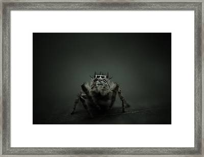 Filbert The Jumping Spider Framed Print by Shane Holsclaw