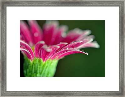 Filled With Glory Framed Print by Melanie Moraga