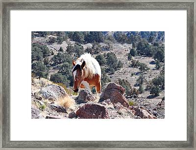 Filly Climbing  Framed Print
