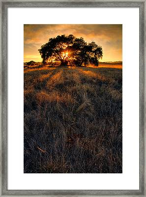 Filtered Framed Print by Peter Tellone