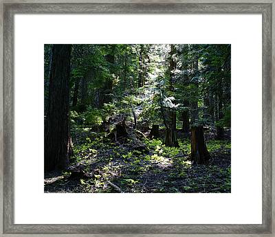 Framed Print featuring the photograph Filtered Sunlight Peace by Ben Upham III