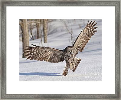 Final Approach Framed Print by Heather King