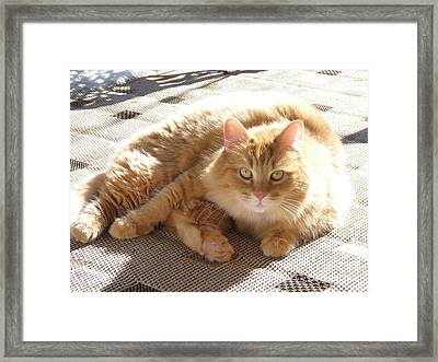 Finally Some Sun Framed Print by Janis  Cornish
