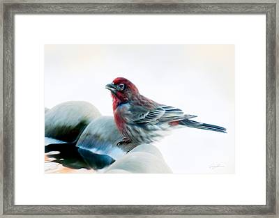 Finch Framed Print by Ann Lauwers