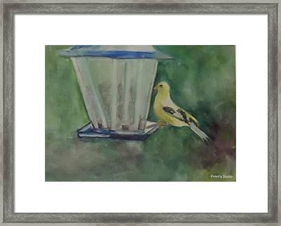 Finch Framed Print by Betty Pimm