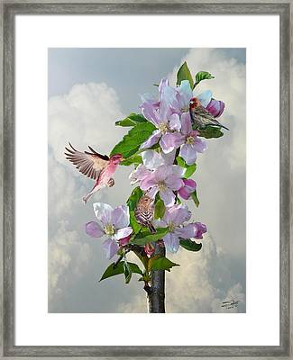 Finches In Blooming Apple Tree Framed Print by IM Spadecaller