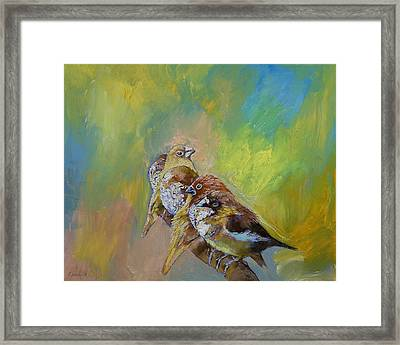 Finches Framed Print