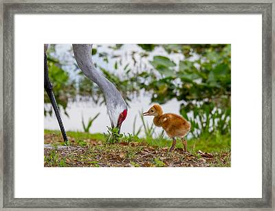 Framed Print featuring the photograph Find Me Another Bug Please by Phil Stone