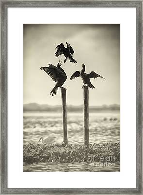 Find Your Own Perch Framed Print