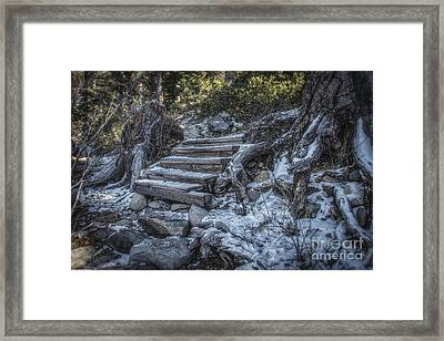 Find Your Own Way Framed Print