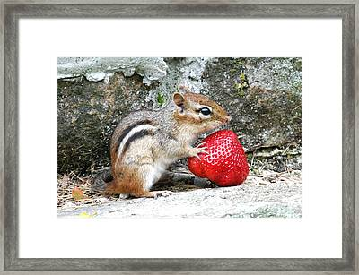 Framed Print featuring the photograph Finders Keepers by Kathy Gibbons