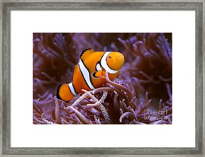 Finding Nemo Framed Print by Shannon Rogers