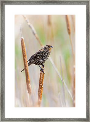 Framed Print featuring the photograph Finding Summer by Steven Santamour
