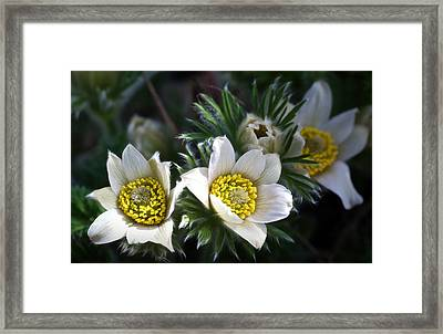 Finding The Sun At Last Framed Print