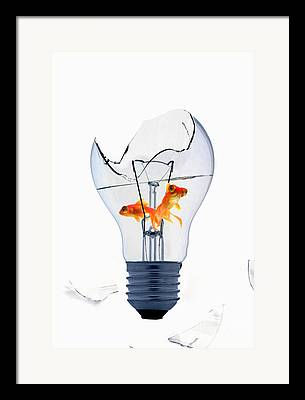 Clipping Path Framed Prints