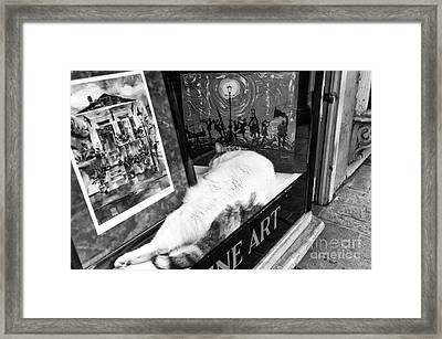 Fine Cat Art Mono Framed Print