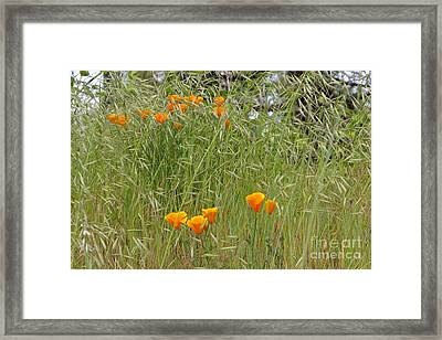 Fine Day Framed Print by Tim Rice