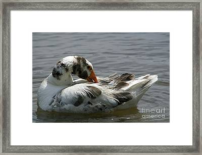 Fine Feathered Friend Framed Print